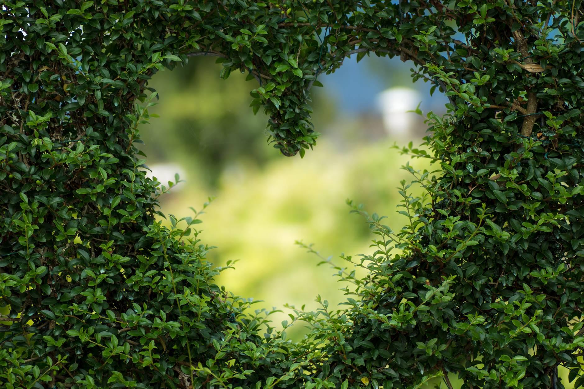 Heart cut into a shrub
