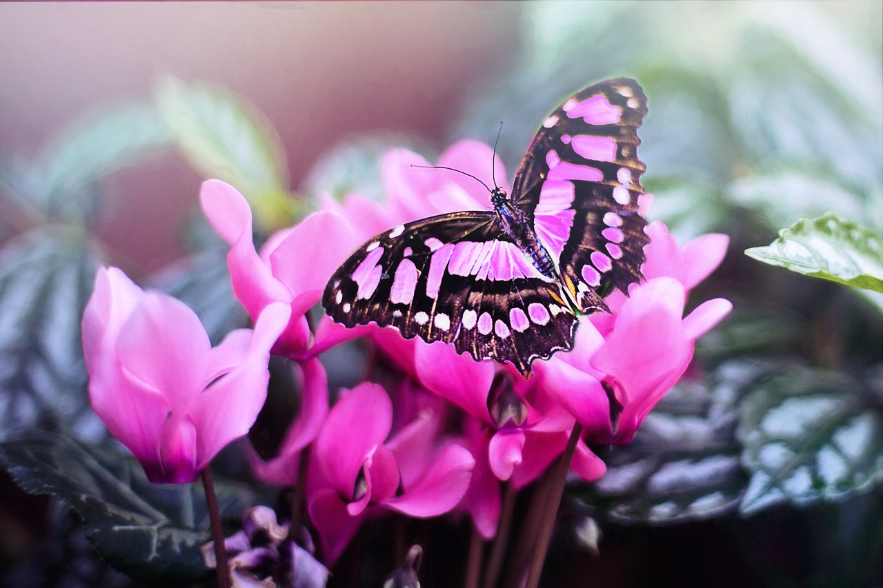Pink butterfly resting on a pink flower